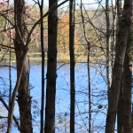 Scarlet Oak Pond